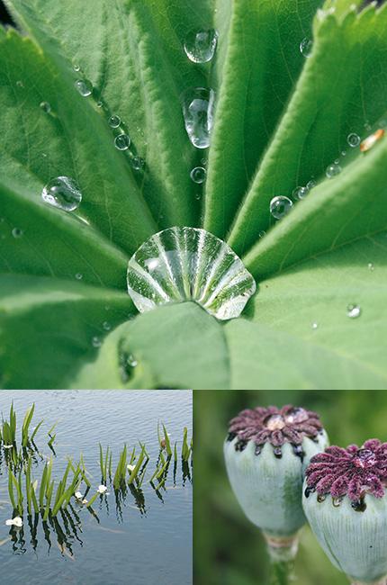 Blatt und Blüten mit Wassertropfen und Gewässer - Wer ist mein Verband? - Landesverband der Wasser- und Bodenverbände