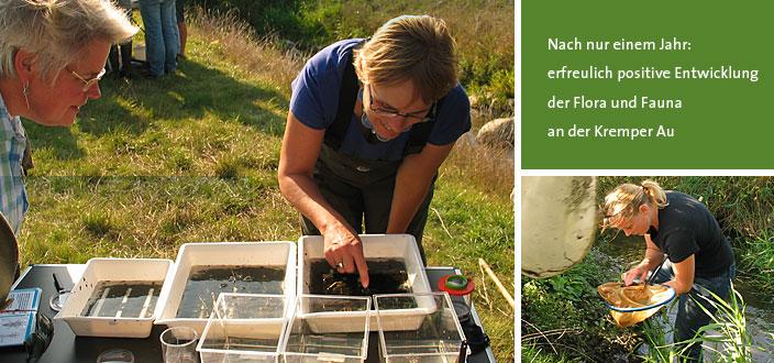 Pro Gewässer - Nach nur einem Jahr: erfreulich positive Entwicklung der Flora und Fauna an der Kremper Au - Landesverband der Wasser- und Bodenverbände