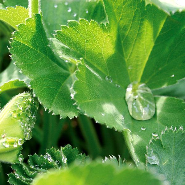 Blatt mit Wassertropfen - Landesverband der Wasser- und Bodenverbände